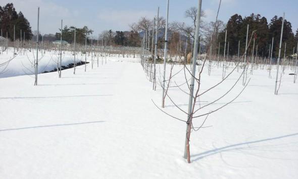 morinokagayaki_2014_03_17